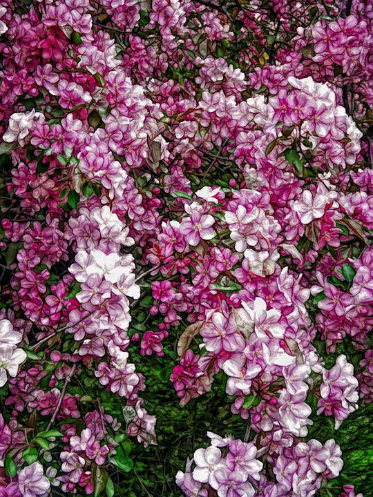 FWC Beautiful Blossoms - Aimee L Maher