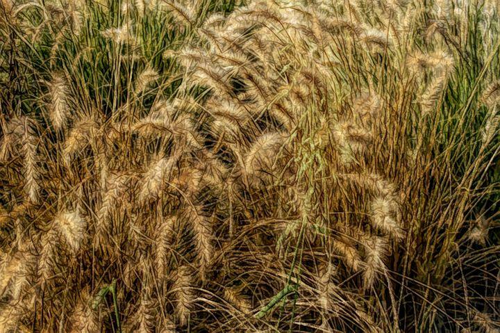 FWC Summer Wheat - Aimee L Maher