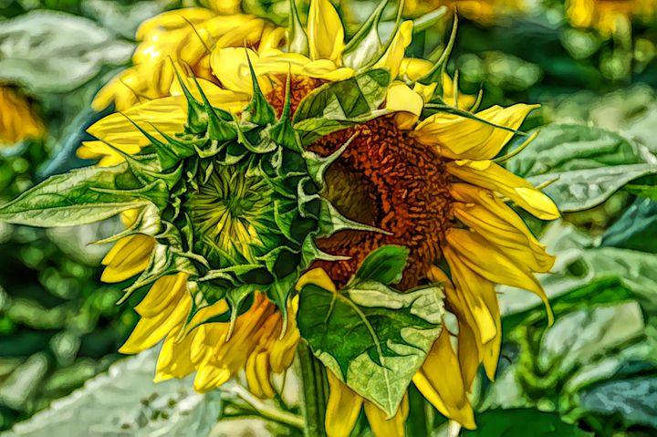 FWC Joyous Sunflower - Aimee L Maher