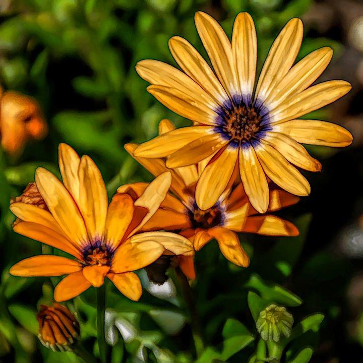 FWC Orange Daisy - Aimee L Maher