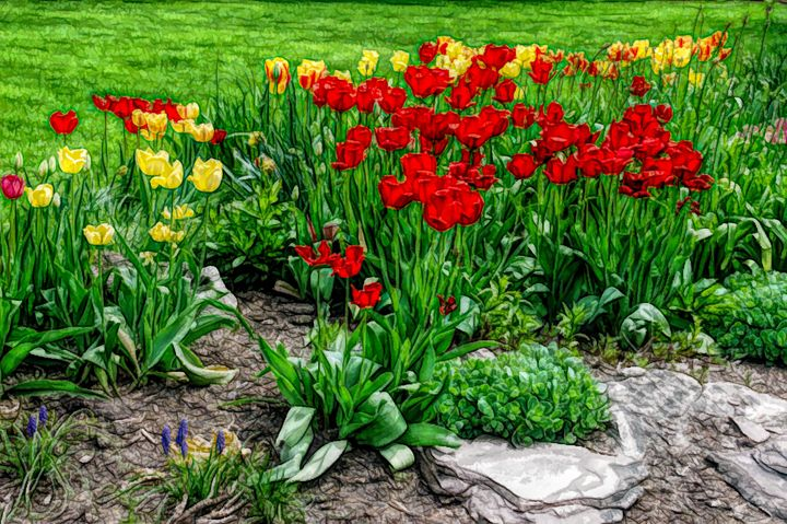 FWC Tulip Gardenscape - Aimee L Maher