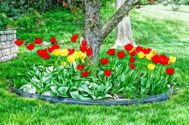 FWC Tulip Bed - Aimee L Maher