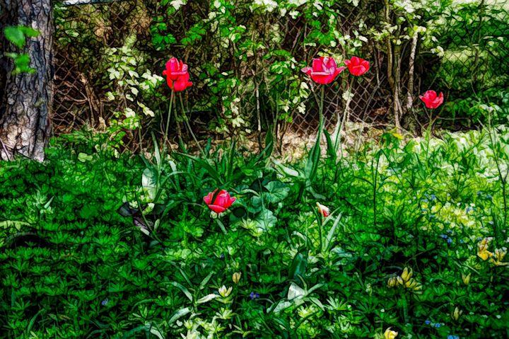 FWC Backyard Tulips - Aimee L Maher