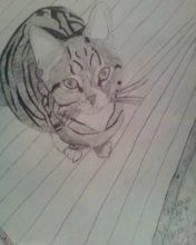 Max The Cat Pencil Drawing