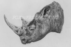 Extremely Endangered Black Rhino