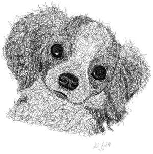 Spaniel puppy 1