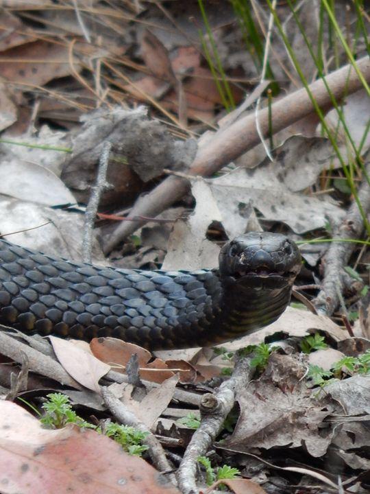 Snake - samararose photography