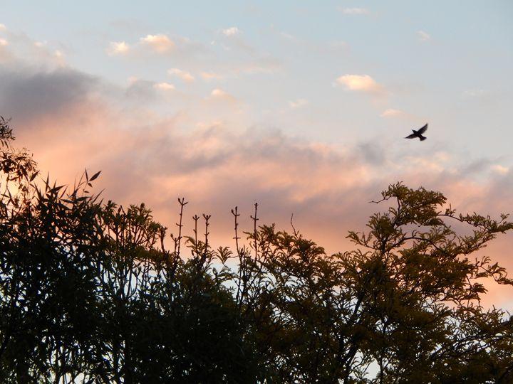 Bird flying in the sunset - samararose photography