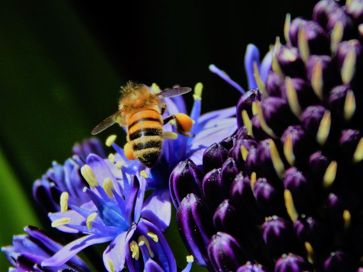 Bee on flower - samararose photography