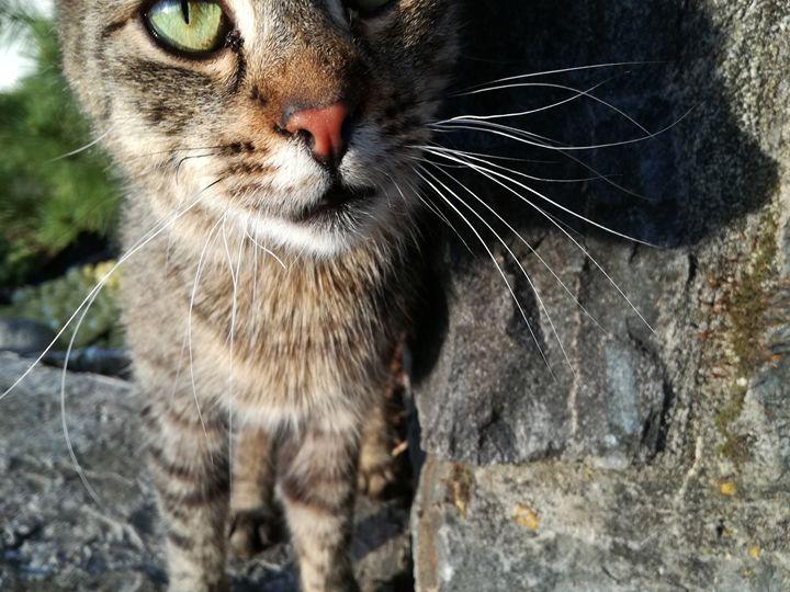 Cat green eye - Danciatko