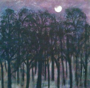 Noite de lua no Bosque