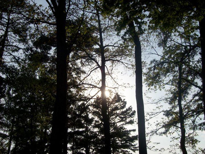 light through the trees - The Lemon Tree