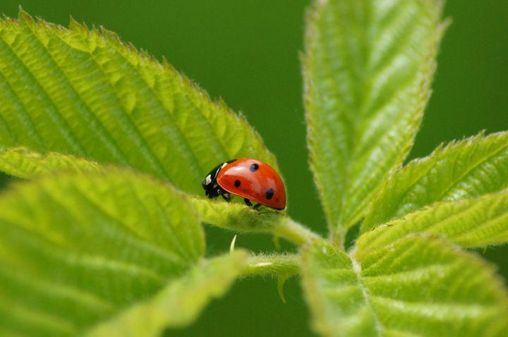 ladybird - starving artist