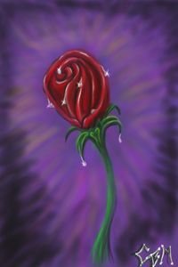 a rose called lilly