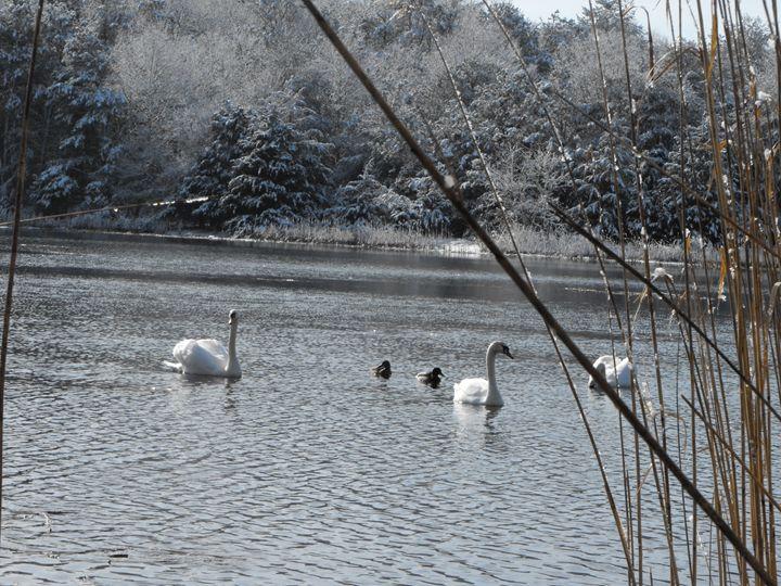 Swan Family - A.B. Artsy Things