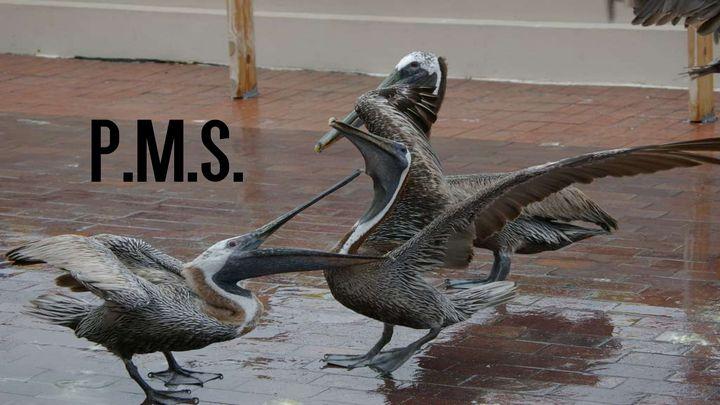 P.M.S. - RJ's Creations