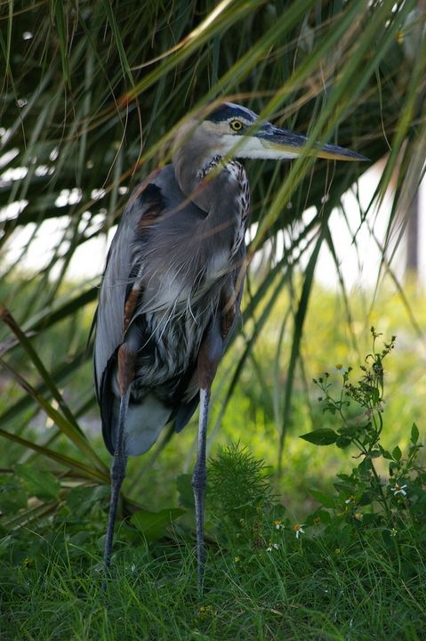 The Beautiful Blue Heron - RJ's Creations