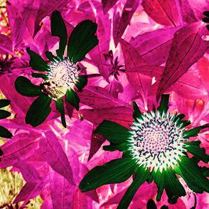 Floral Piece I