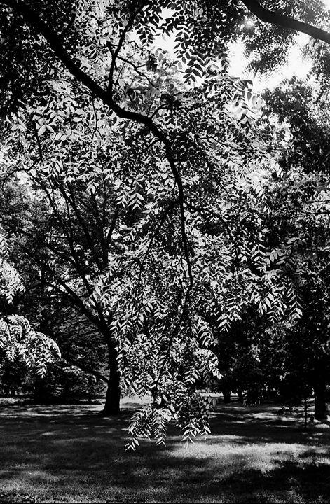 """"""" Morning in the Park """" - Lyoshastudio"""