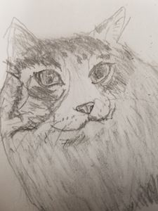 Maine Coon - Malcolm's Art