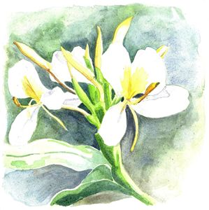 White Ginger - Kaitlin McShea Art Prints