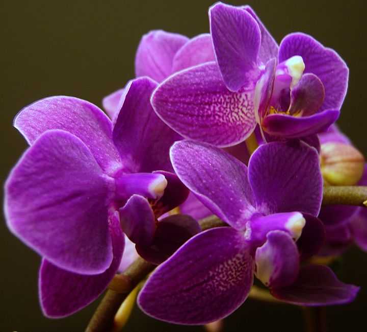 Fun With Orchids - McLachlan