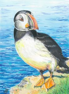 Puffin,Oh East Side