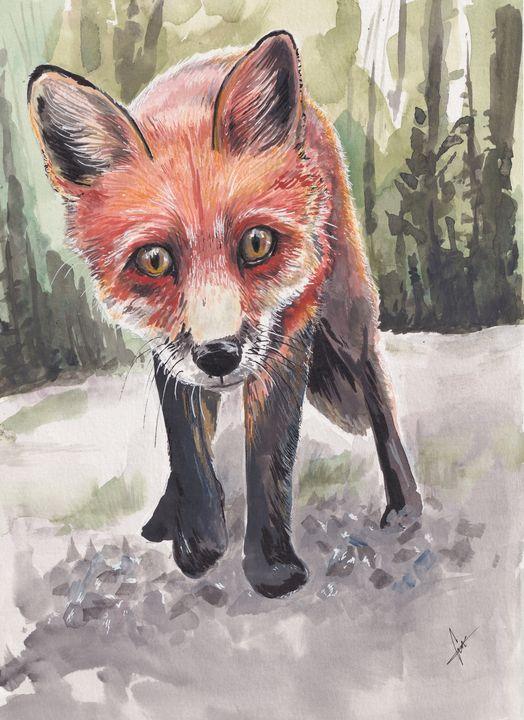 Red Fox - Eman Salem