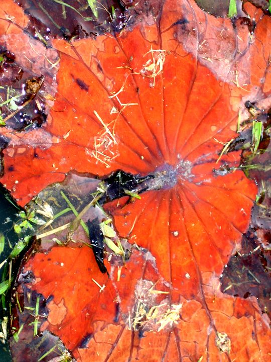Lotus leaves of impermanence - Still Waters Arts