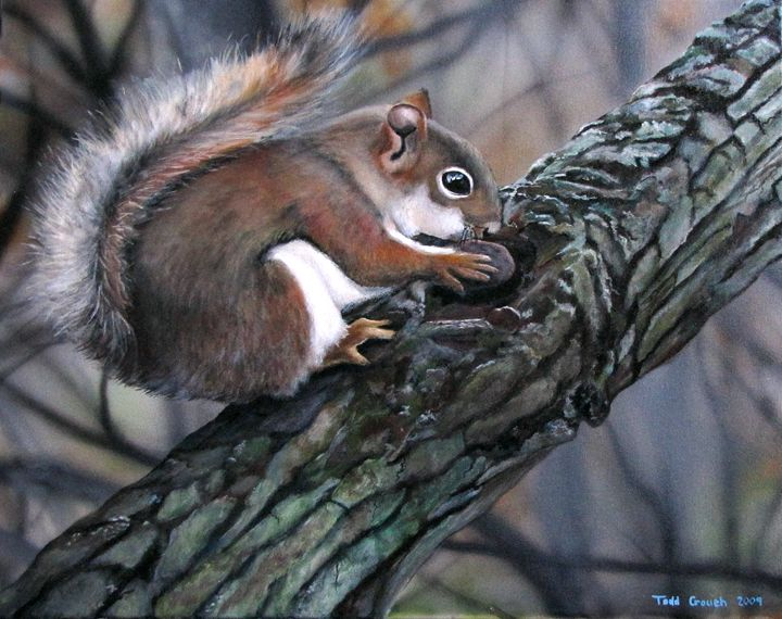 Red Squirrel - Todd Crouch