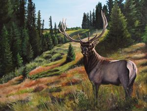 Elk: Close Encounter