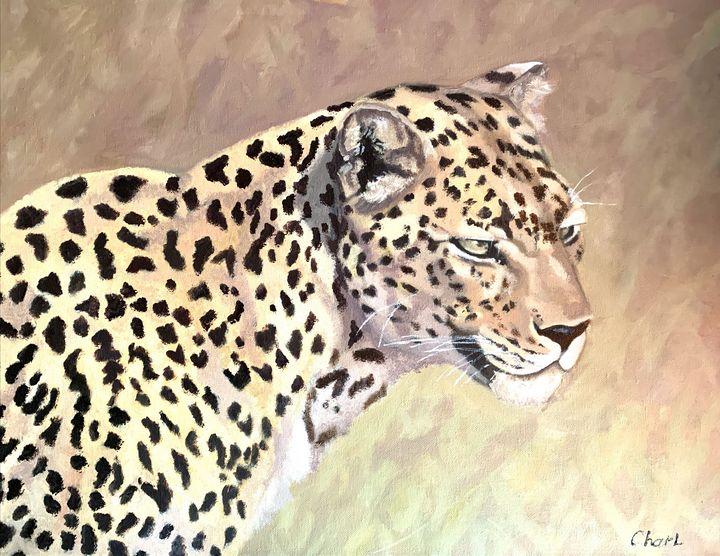 Beautiful Cheetah - Charl John Ruiters