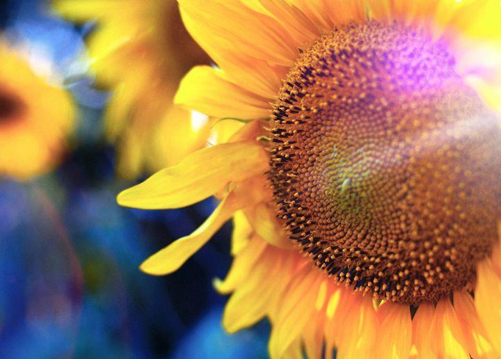Sunflowers - Art