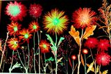 natures FIREWORKS. Limited Editions