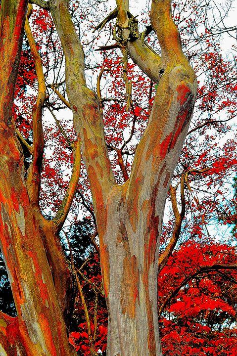 Painted tree - dbJR