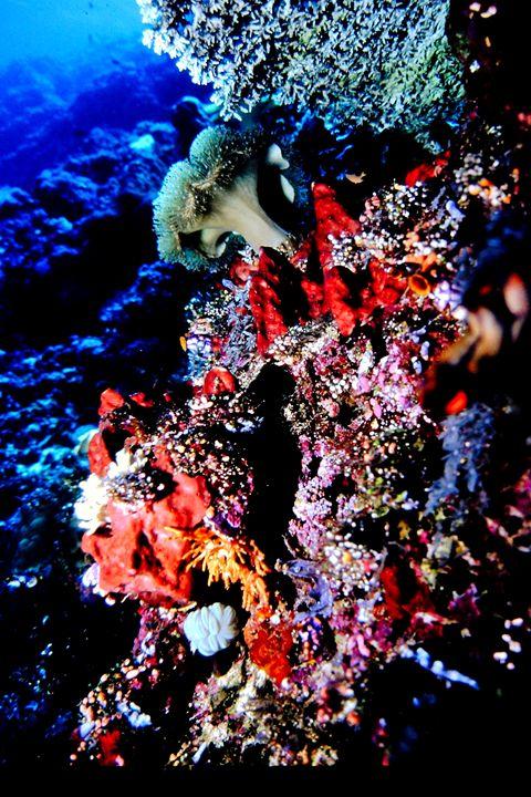The reef - dbJR