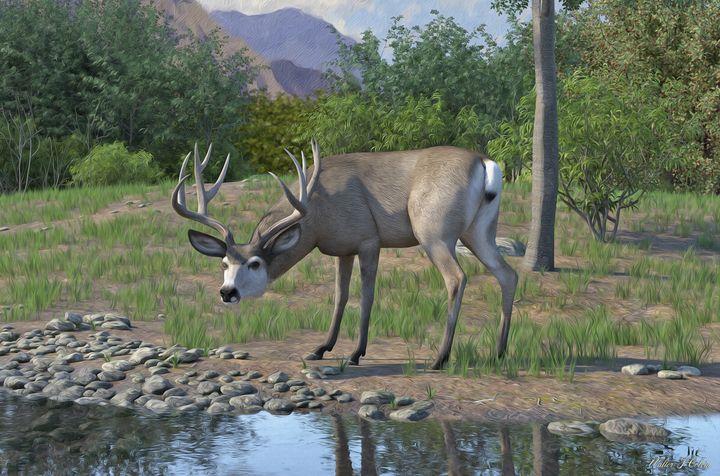 Mule deer Buck - Walter Colvin's art