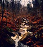 stream in the fall