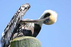 Pelican Yoga