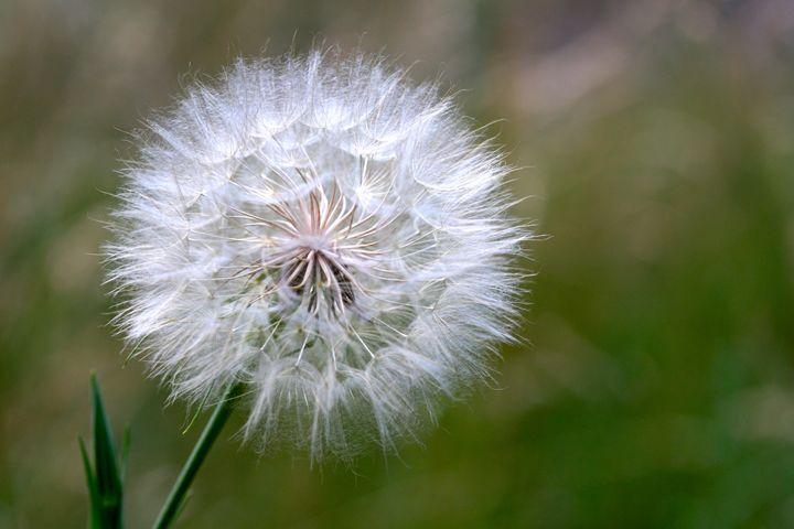 Make A Wish - Harrison Graves