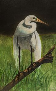 Solemn White Crane - Kimberly Rideout