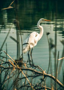 Egret in Paradise - Nicole's Captured Moments