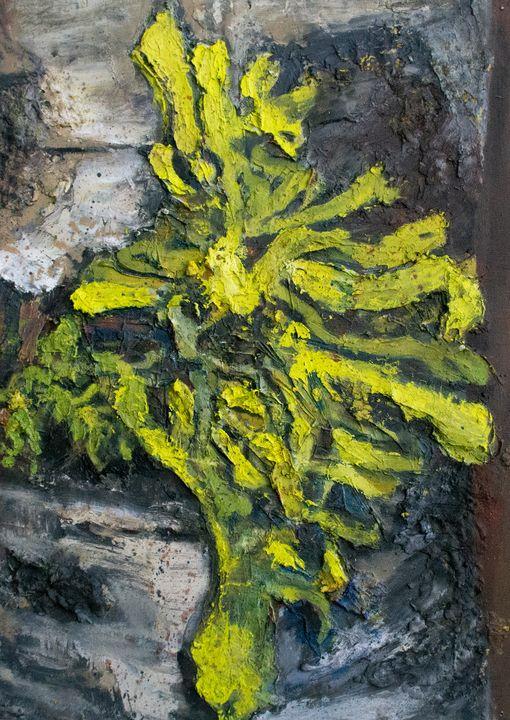 Lichen - Rachel Aurora