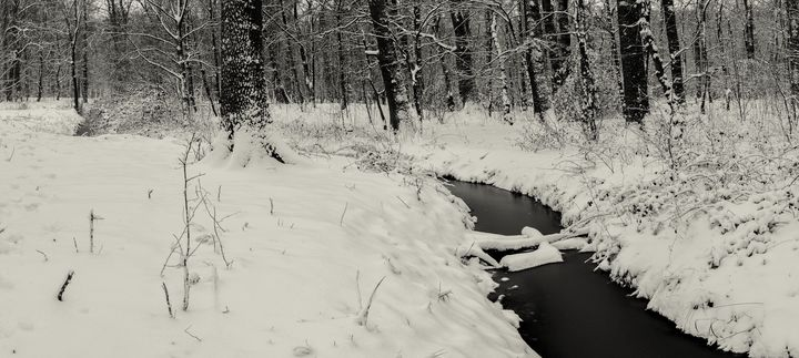 Beneath the drear December trees - Alex Sol