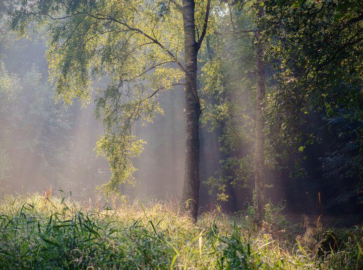 Between the Seasons - Alex Sol