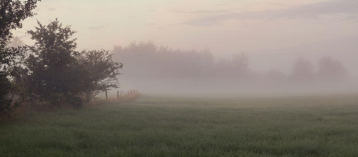 Meadow's Dream - Alex Sol