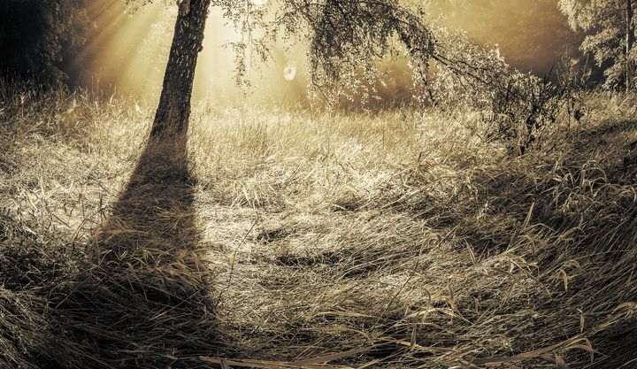Golden Morning - Alex Sol