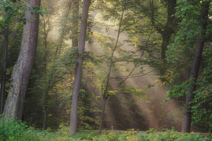 Path of Light - Alex Sol