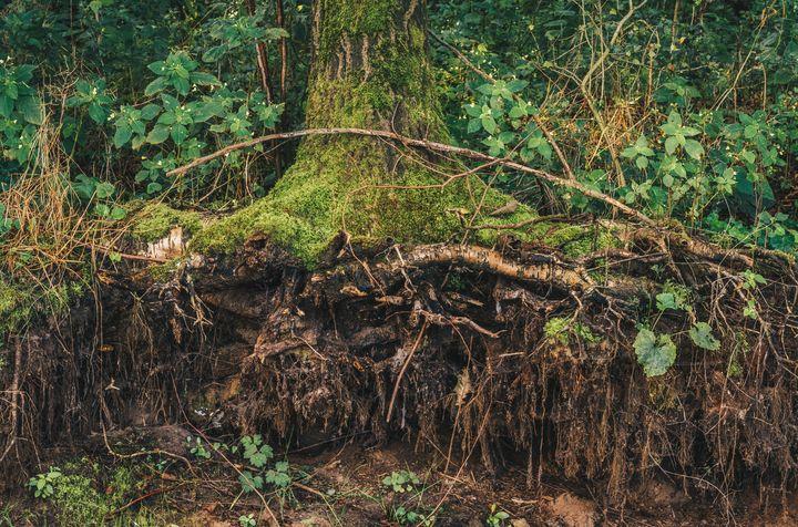 Roots - Alex Sol