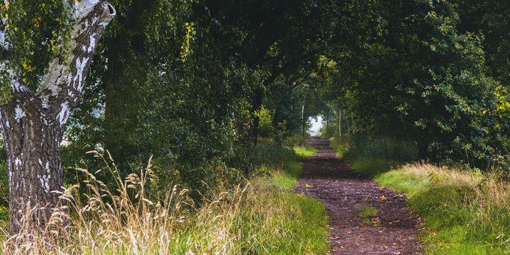 On the Right (Path) - Aleksander Solarski